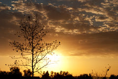 Zonsopgang met boomsilhouet stock afbeelding