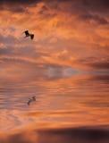 Zonsopgang met een vogel Royalty-vrije Stock Foto's