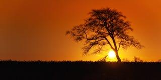 Zonsopgang met eenzaam boomsilhouet Stock Afbeelding