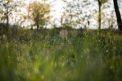 Zonsopgang met gras en waterdalingen Royalty-vrije Stock Fotografie