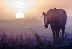 Zonsopgang met paard royalty-vrije stock foto's