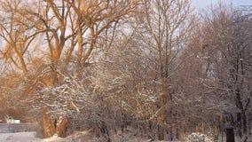 Zonsopgang met sneeuw op bomen stock videobeelden