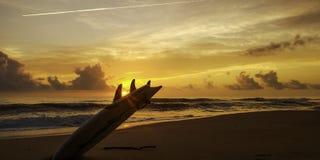 Zonsopgang met surfplank stock fotografie