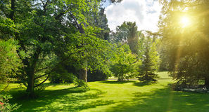 Zonsopgang in mooi park Royalty-vrije Stock Afbeeldingen