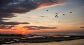 Zonsopgang in Ogunquit Maine met Vogels Royalty-vrije Stock Afbeeldingen