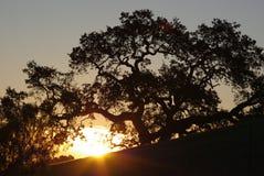 Zonsopgang op de heuvels van Californië stock afbeeldingen