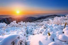 Zonsopgang op Deogyusan-bergen met sneeuw in de winter worden behandeld, Korea dat royalty-vrije stock fotografie