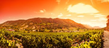 Zonsopgang op een hellingswijngaard in Sardinige Stock Foto