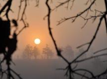 Zonsopgang op een mistige de winterochtend Stock Foto