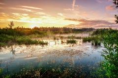 Zonsopgang op het moeras stock foto