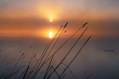 Zonsopgang op Noordelijke Dvina De mist van de ochtend over de rivier royalty-vrije stock foto's