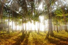 Zonsopgang op tropisch eiland. Royalty-vrije Stock Foto