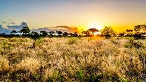 Zonsopgang over de savanne en grasgebieden in het centrale Nationale Park van Kruger stock foto's