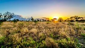 Zonsopgang over de savanne en grasgebieden in het centrale Nationale Park van Kruger stock afbeeldingen