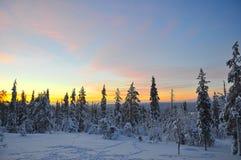 Zonsopgang over een bos in Lapland, Finland stock afbeelding