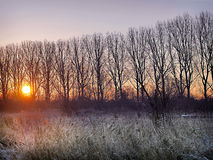 Zonsopgang over Frosty River Bank Royalty-vrije Stock Afbeelding
