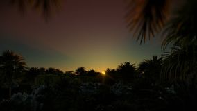 Zonsopgang over palmbos, 4K stock footage