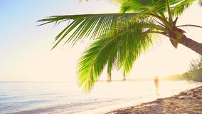 Zonsopgang over tropische eilandstrand en palmen Tropisch strand met palm stock footage