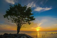 Zonsopgang overzeese boom en steen royalty-vrije stock foto