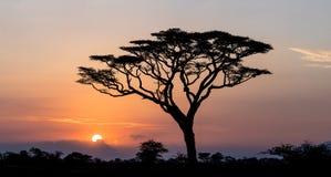 Zonsopgang in Serengeti, Tanzania Stock Foto's