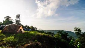 Zonsopgang in Thap (pha-kep-tawan) Lan National Park stock video