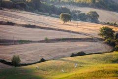 Zonsopgang in Toscaans platteland, Toscanië, Italië Royalty-vrije Stock Foto