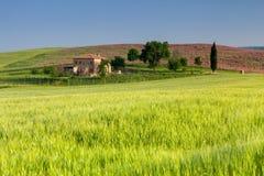 Zonsopgang in Toscanië Stock Foto's
