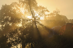 Zonsopgang tropische berg i Royalty-vrije Stock Foto