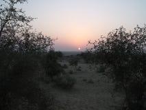 Zonsopgang in Woestijn Stock Foto's