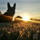 Zonsopgang wuth Duitse herder stock foto's