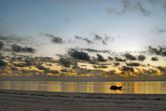 Zonsopgang in Zanzibar stock afbeelding