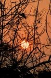 Zonsopgangsilhouet Stock Afbeeldingen