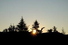 Zonsopgangsilhouet van pijnboombomen en een zonnestraal boven op Cadillac-Mo stock afbeeldingen