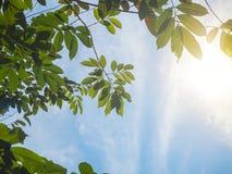 Zonstraal met blauwe wolkenhemel en vers gebladerte Verse groen van zonneschijn het filtreren door bladeren stock foto