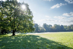 Zonstralen die door de kroon van een grote boom glanzen Stock Foto
