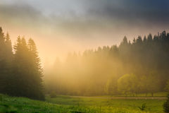 Zonstralen die door de wolken en de mist in bossen breken Royalty-vrije Stock Foto