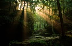 Zonstralen die door het bos een hoogtepunt bereiken royalty-vrije stock foto