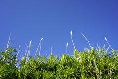 Zonstralen die door het grote groene gras zoals bamboe met blauwe overzeese oppervlakte en hemel op achtergrond glanzen Concept a stock afbeeldingen