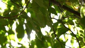 Zonstralen door boombladeren stock videobeelden