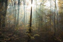 Zonstralen door de bomen tijdens de herfst Royalty-vrije Stock Afbeeldingen