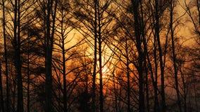 Zonstralen door mist en bomen bij zonsondergang Stock Afbeelding