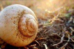 Zonstralen op shell Stock Foto