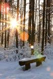 Zonstralen in sneeuwpijnboombos royalty-vrije stock fotografie