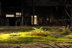 Zonvlek op groene vegetatie in de verlaten industriële bouw stock fotografie