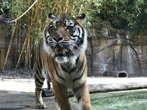 zoo Fotografia Stock