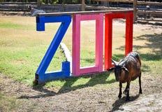 zoo στοκ εικόνες