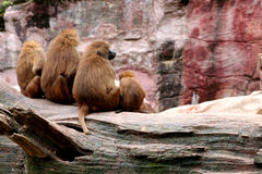In the zoo Royalty Free Stock Photo