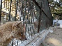 zoo στοκ φωτογραφίες