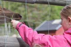 At the zoo. Young girl feeding a deer through a fence Royalty Free Stock Photo