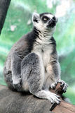 Zoo 26 de Moscou Images stock